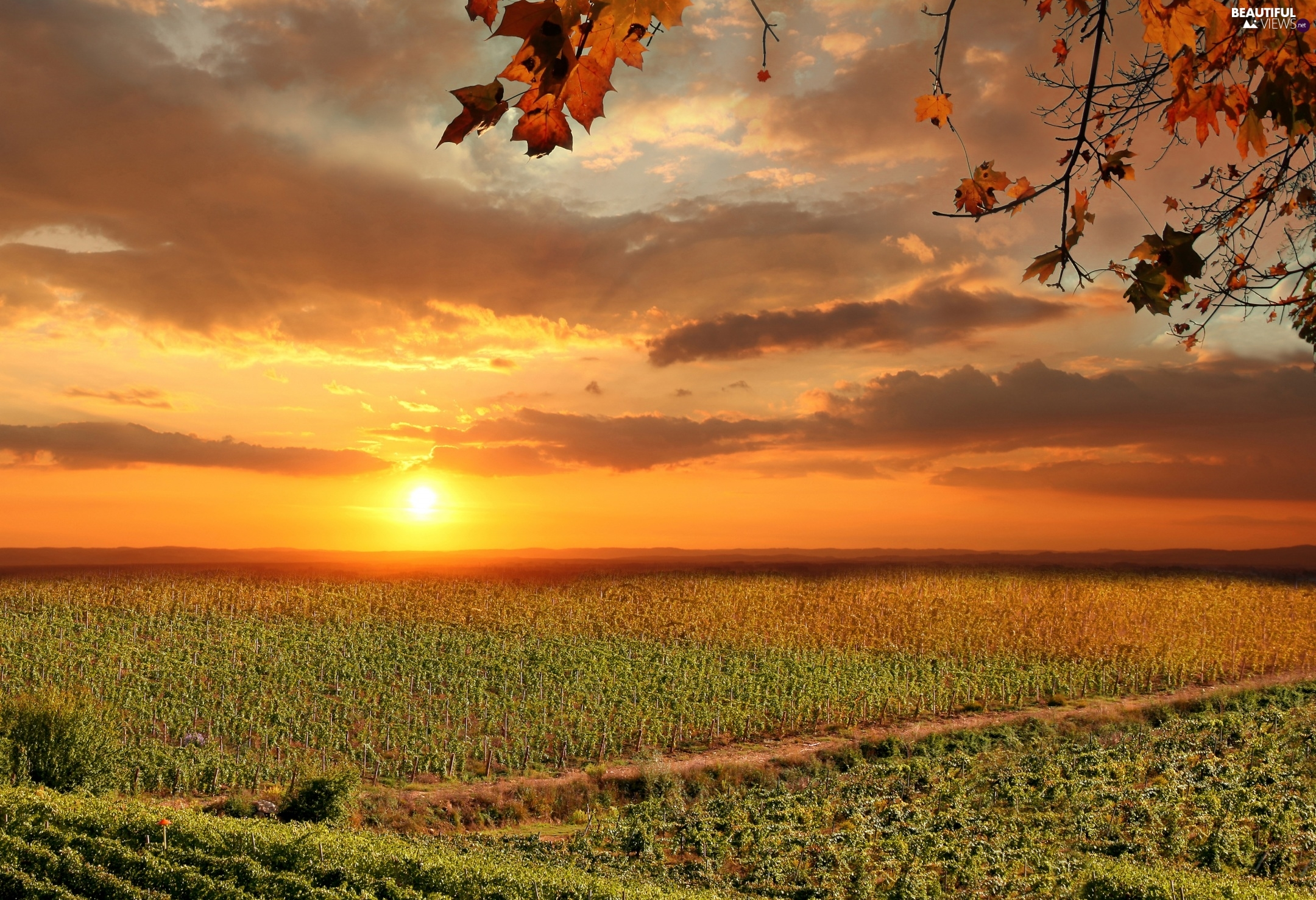 Sunrise, Field, vineyards, Italy, clouds, Tuscany