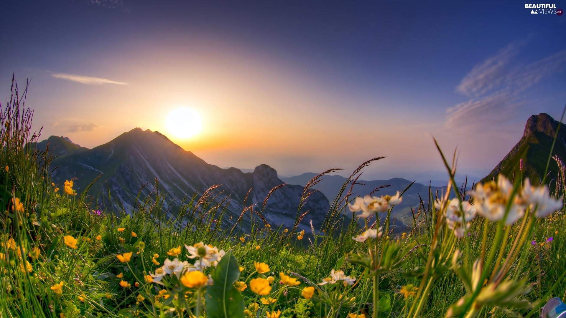 sunrise mountains flowers - photo #5