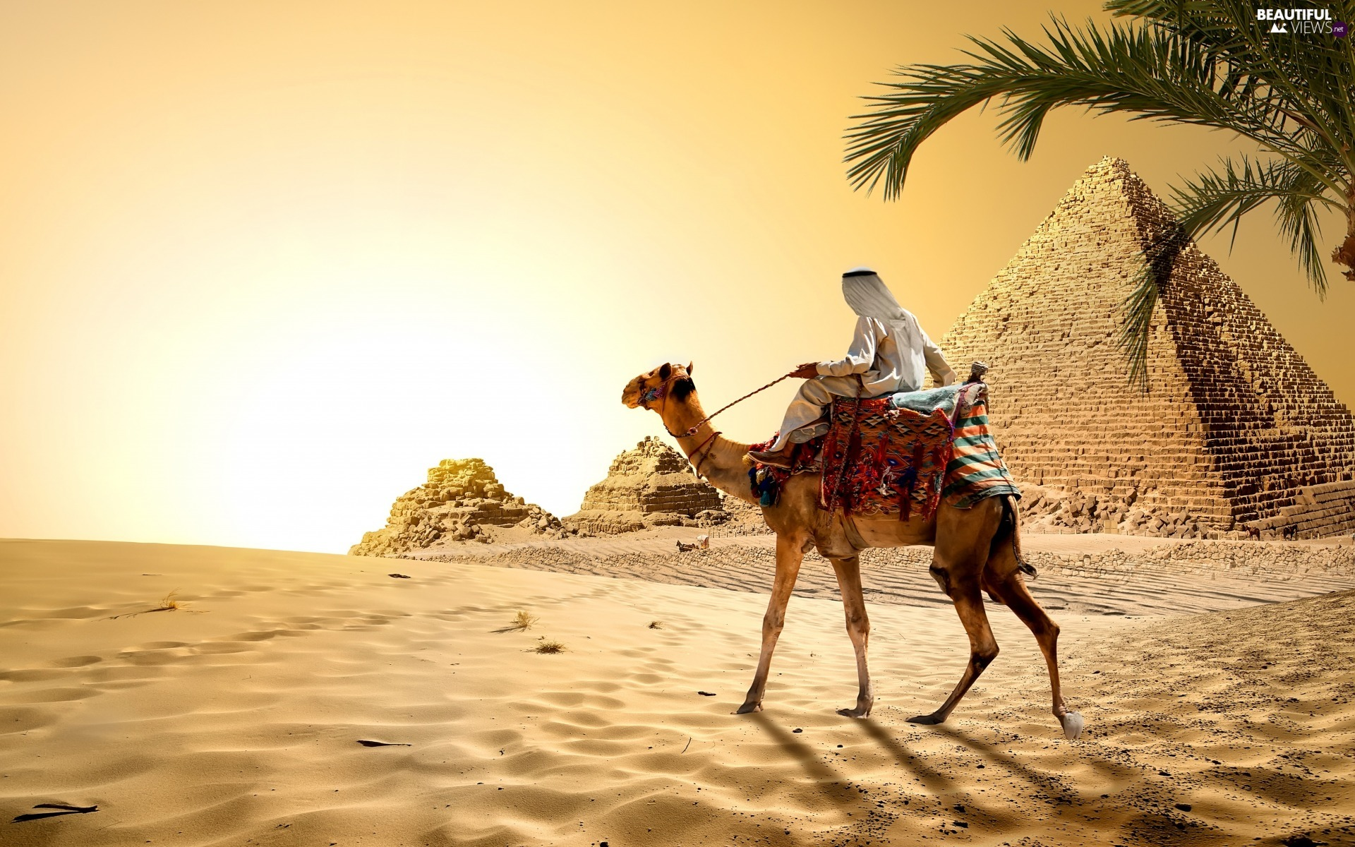 Great Sunsets, Desert, Sand, Egypt, Palm, Camel, Pyramid