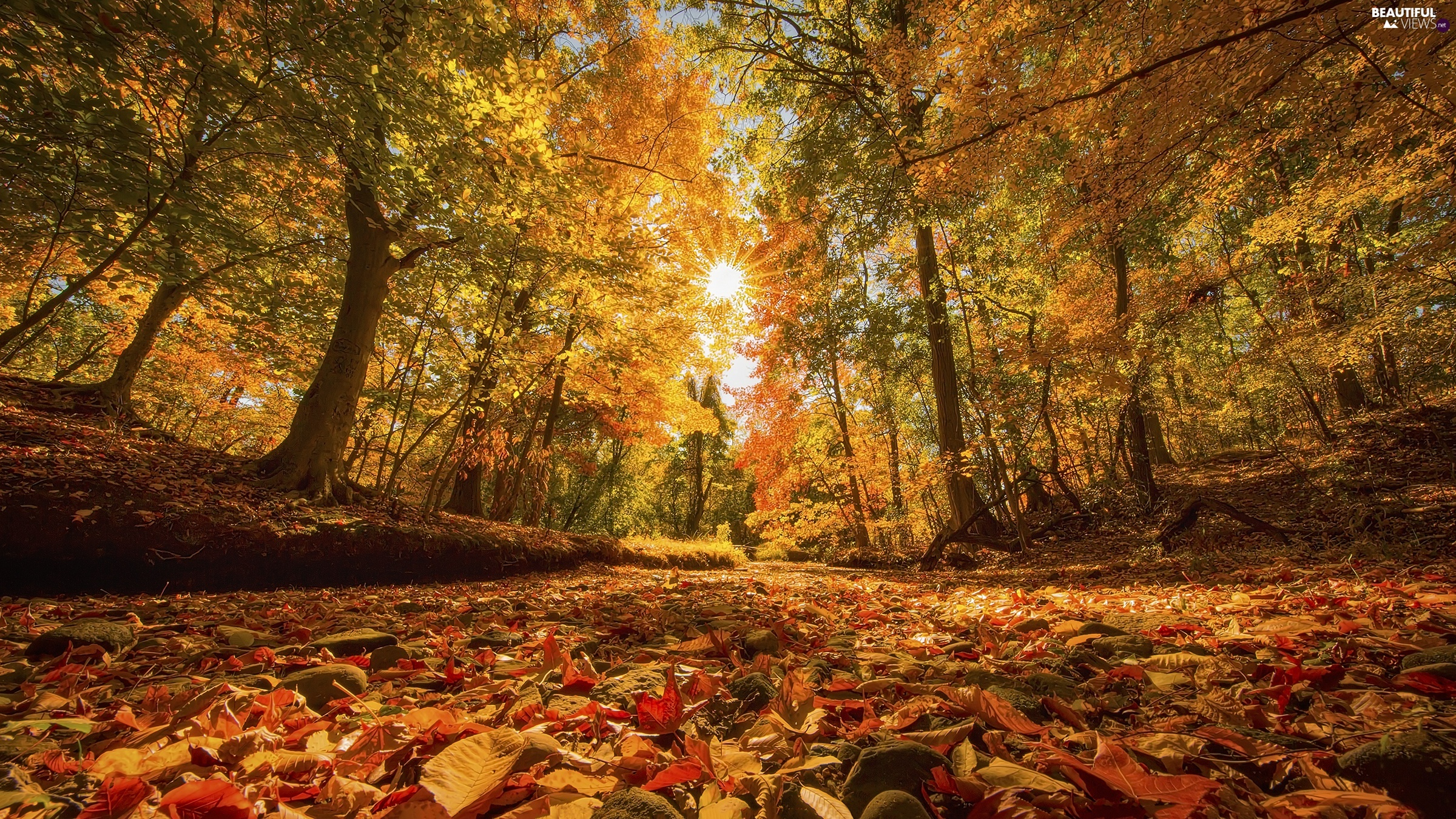 trees, autumn, Leaf, rays of the Sun, viewes, forest