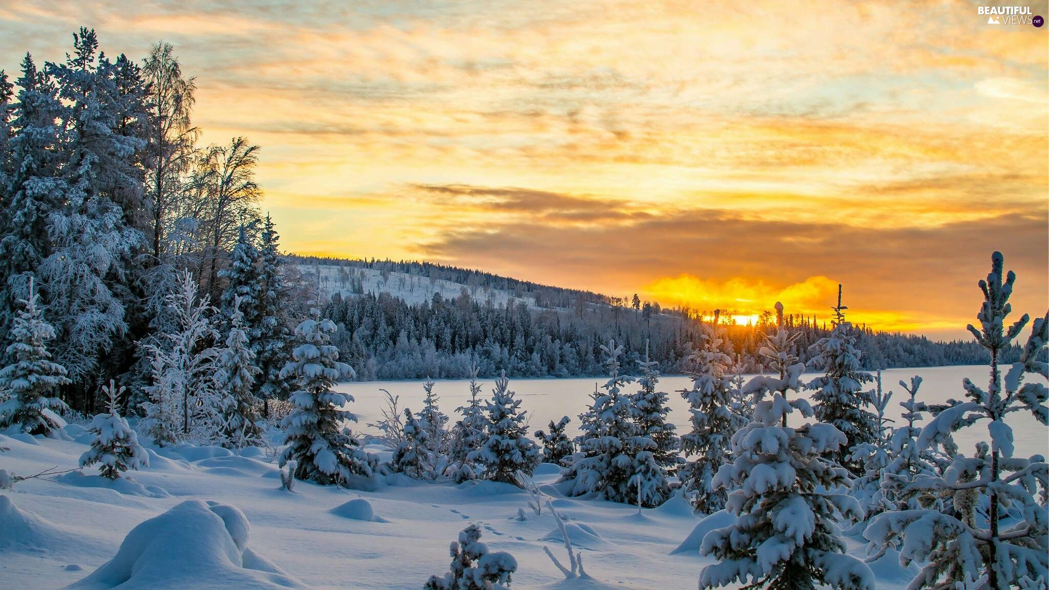 viewes, The Hills, Great Sunsets, trees, winter, Spruces, snow