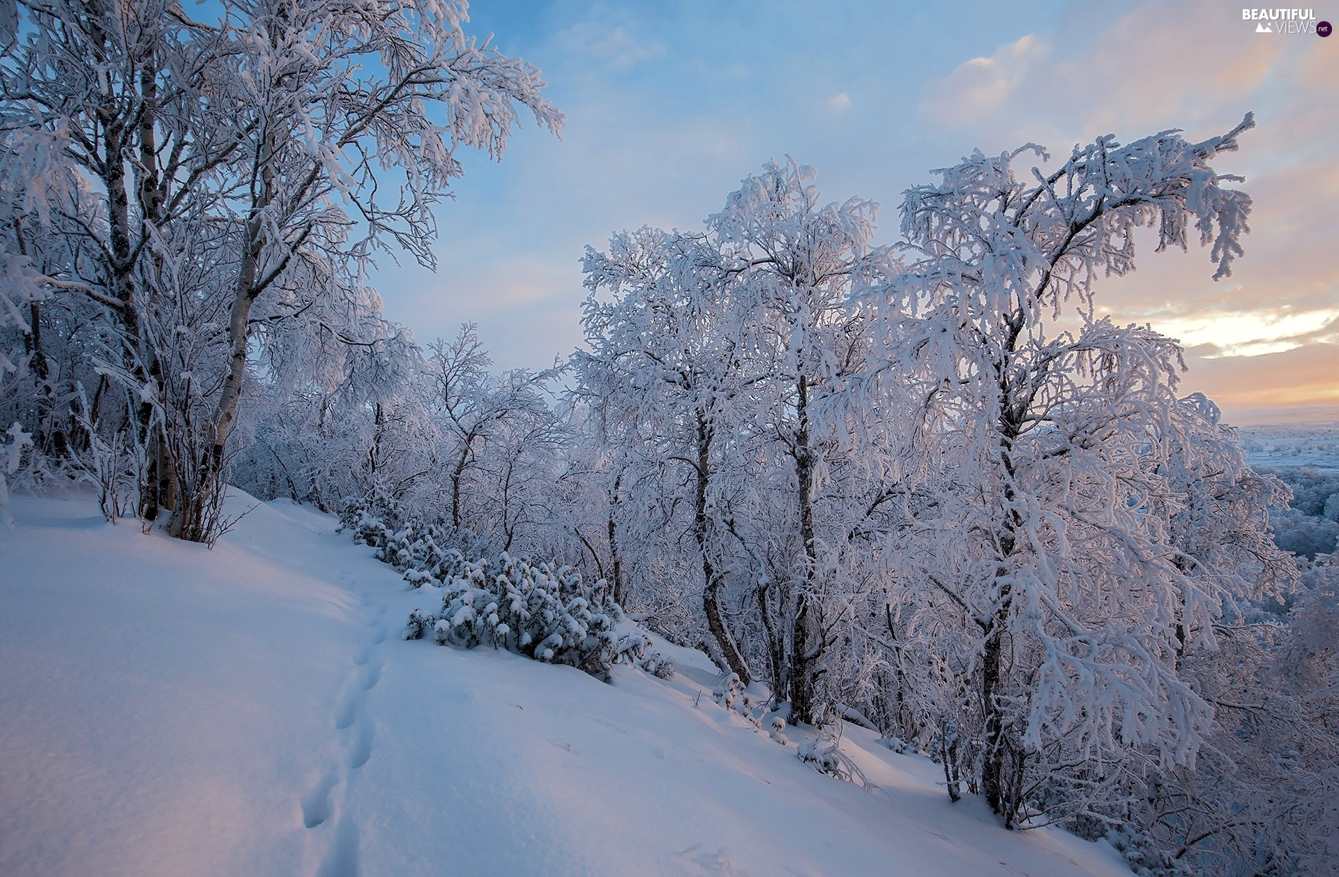 winter, Finland, trees, viewes, Snowy, Lapland