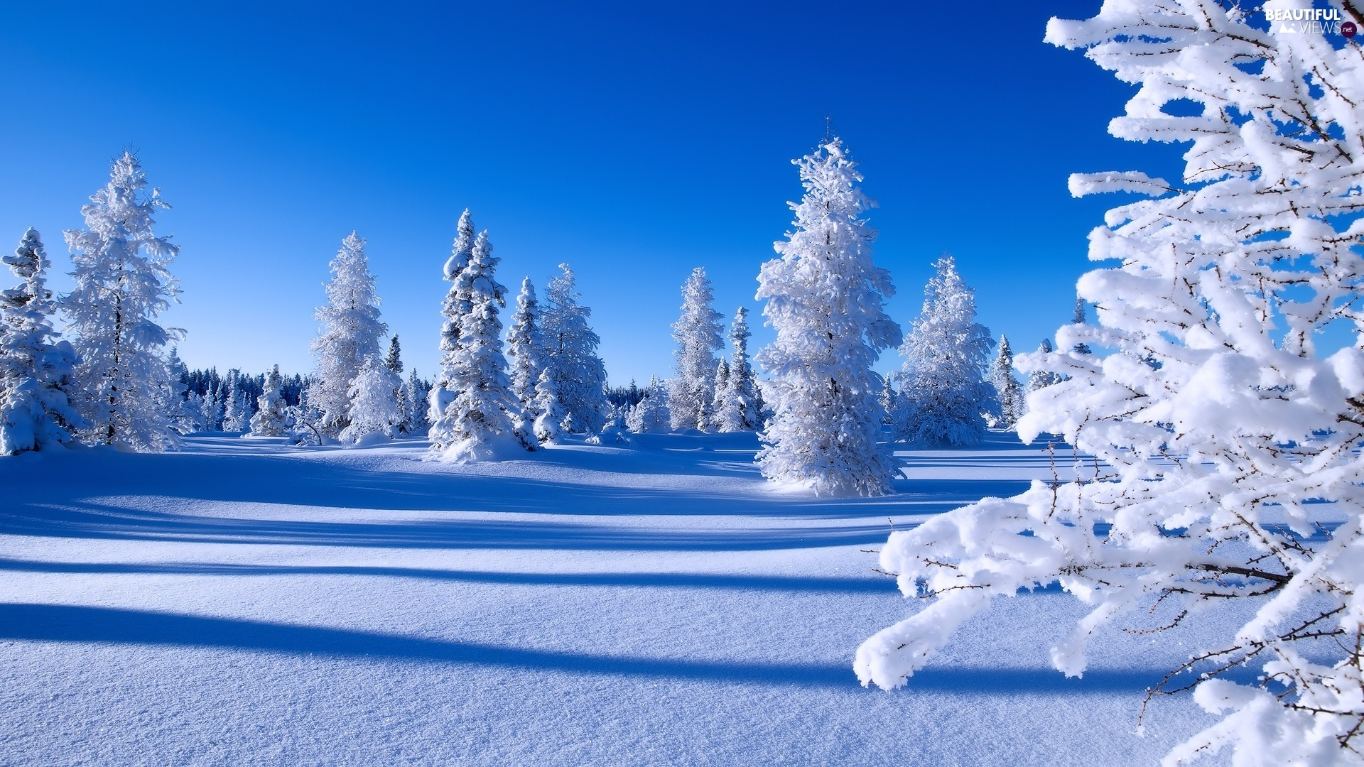 Snowy winter viewes spruces trees snow beautiful for Desktop gratis inverno