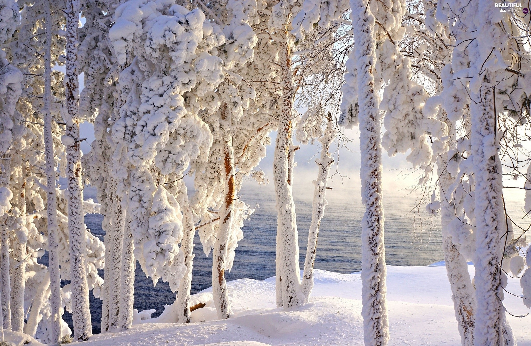 water, viewes, Snowy, trees