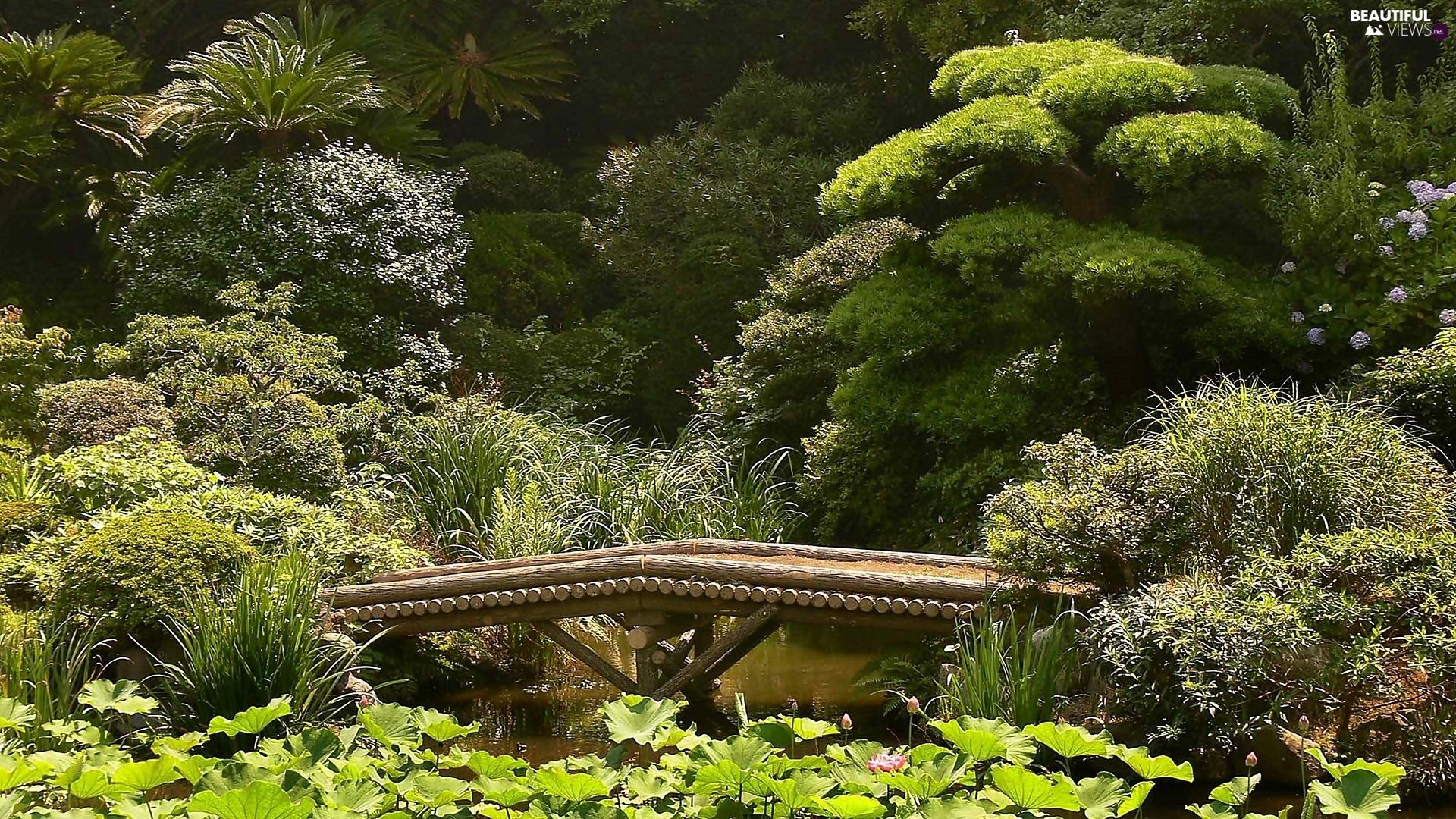 Wooden Pond Car Garden Bridges Japanese Beautiful