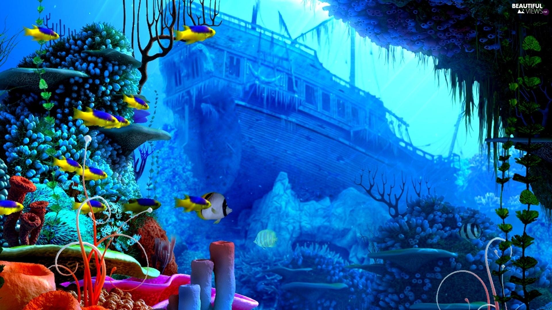 wreck, coral, Ocean, fish, reef - Beautiful views wallpapers ...