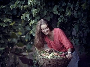 apples, harvest, orchard, basket, Women