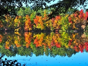 Autumn, forest, trees, viewes, lake