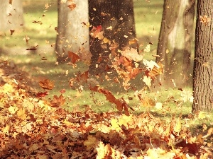 autumn, Leaf, Wind