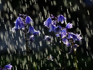Rain, flowers, bells, Blue