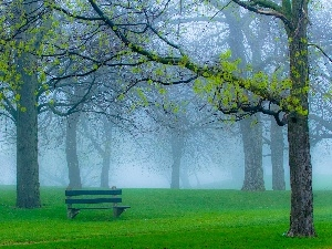 Bench, Fog, trees, viewes, Park