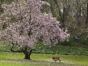 forest, flourishing, Bench, Spring, Flowers, trees