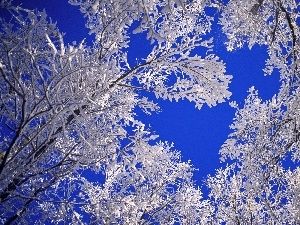 blue, Sky, Covered, snow, trees