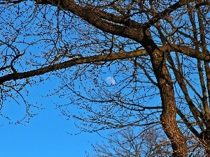 blue, trees, branch pics, Sky