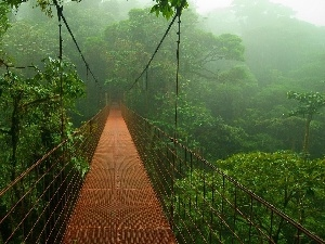 jungle, bridge