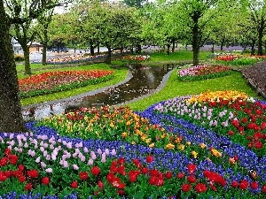 brook, Tulips, trees, viewes, Park