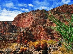 layers, canyon, Cactus, bed-rock