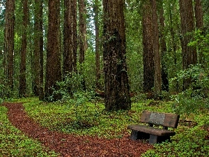 California, Park, Bench