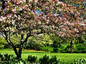 Spring, botanical garden, Chicago