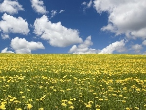 clouds, Meadow, dandelions