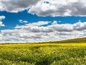 field, Sky, clouds, rape