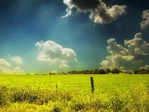 clouds, Field, grass