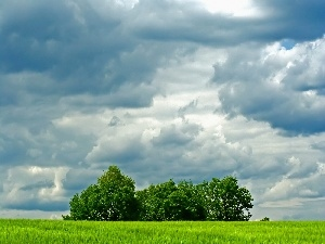 Meadow, viewes, clouds, trees