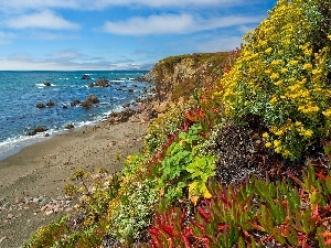 color, Plants, craggy, coast, sea