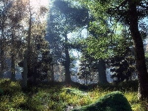 viewes, forest, rays, trees, landscape, Conifers, sun