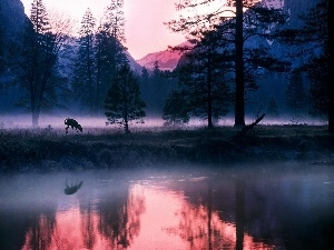Mountains, water, deer, Fog
