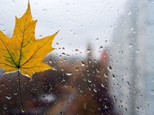 maple, Glass, drops, leaf