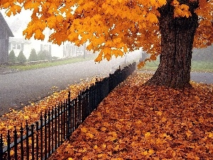Leaf, autumn, fence, Street, trees, Yellow