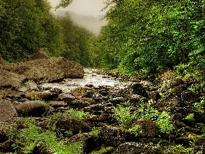 fern, Fog, River, Stones, forest
