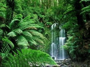 fern, waterfall, Tropical