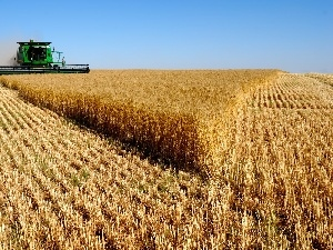 cereals, combine-harvester, Field