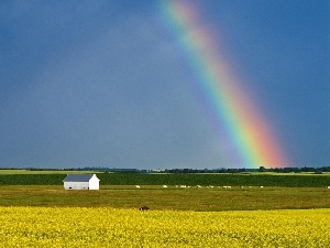 rape, Great Rainbows, Field
