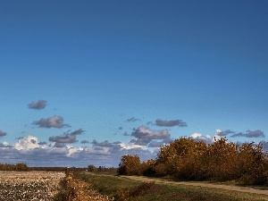 Way, viewes, Field, trees