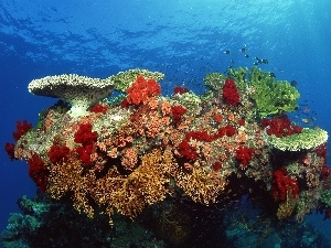 reef, water, fishes, coral