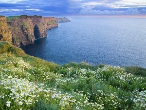 Flowers, Coast, Cliffs