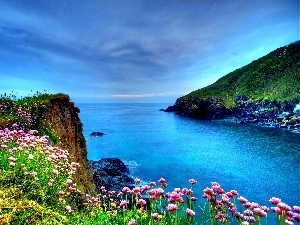 Flowers, sea, Coast
