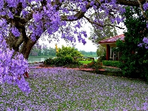 house, trees, Flowers, Garden