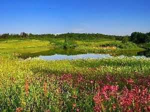Flowers, Meadow, Pond