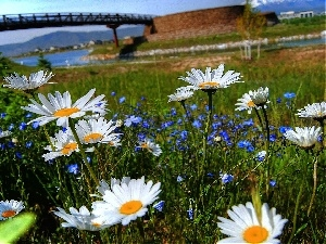 Spring, River, Flowers, bridge