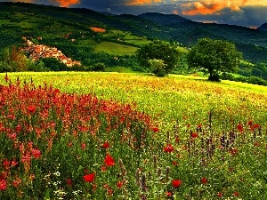 Flowers, summer, Meadow, color, Mountains