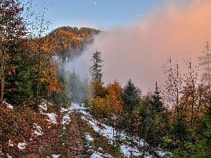 Fog, autumn, woods, Way, Mountains