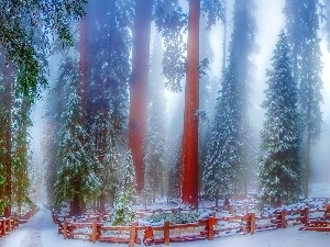 viewes, forest, Way, trees, winter, Fog, Fance