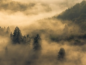 Fog, clouds, forest