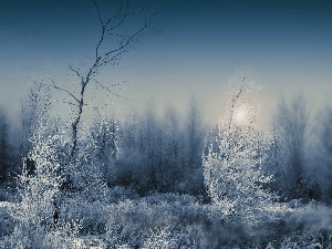 Fog, snow, forest