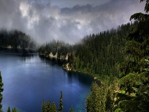 Fog, forest, lake