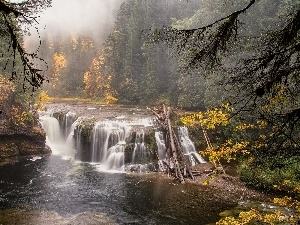 River, forest, Fog, waterfall